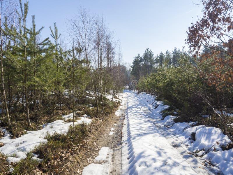 Schnee bedeckte Felderdweg im Winterwald mit Fichte und Kiefer, Landschaft am sonnigen Tag, blauer Himmel stockfotos