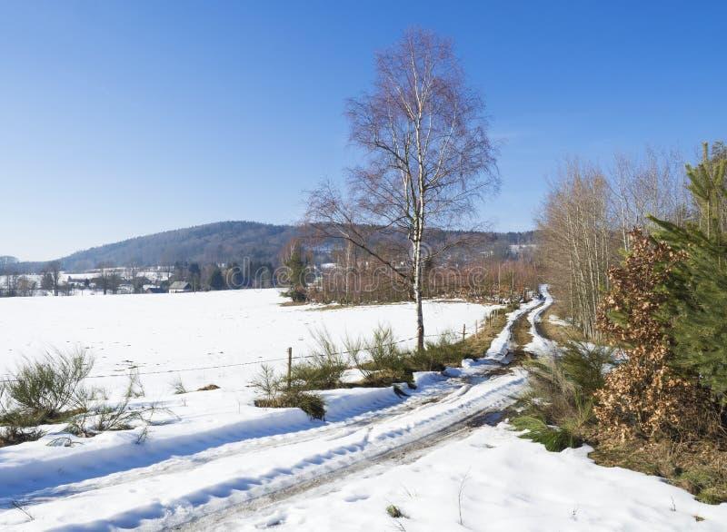 Schnee bedeckte Feldschotterwegkurve im Winterwald mit hohem Suppengrün, Landschaft des ländlichen Dorfs, sonniger Tag stockbilder
