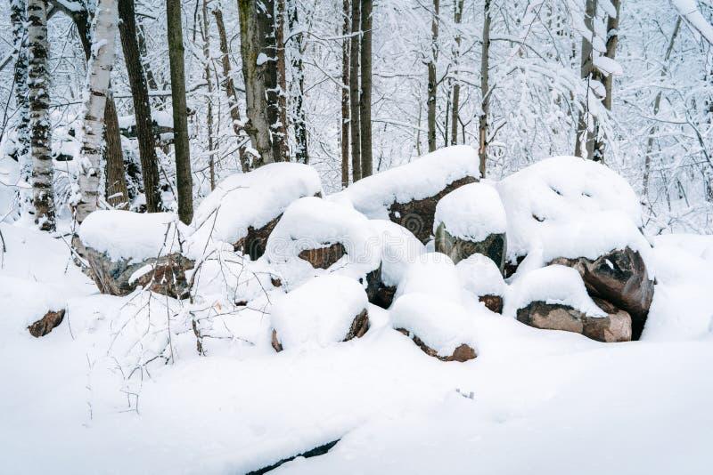 Schnee bedeckte Felsen in einem Wald stockbild