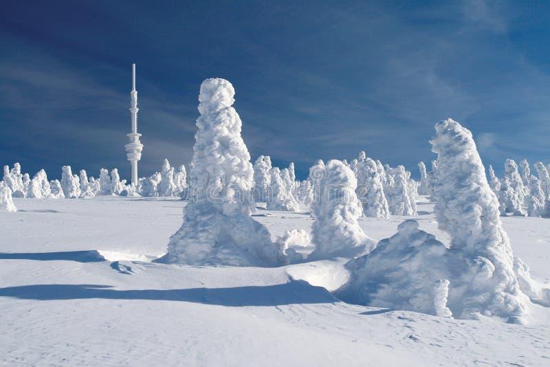 Schnee bedeckte Fichten stockfotografie