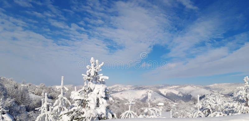 Schnee bedeckte gezierte Bäume in der Gebirgswaldwinterlandschaft am sonnigen Morgen Schneeantriebe nach Schneefällen und Sturm lizenzfreie stockfotos
