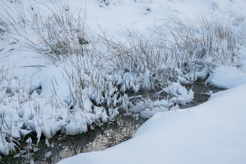 Schnee bedeckte grasartige Bank durch einen Gebirgsstrom in Wales stockbilder