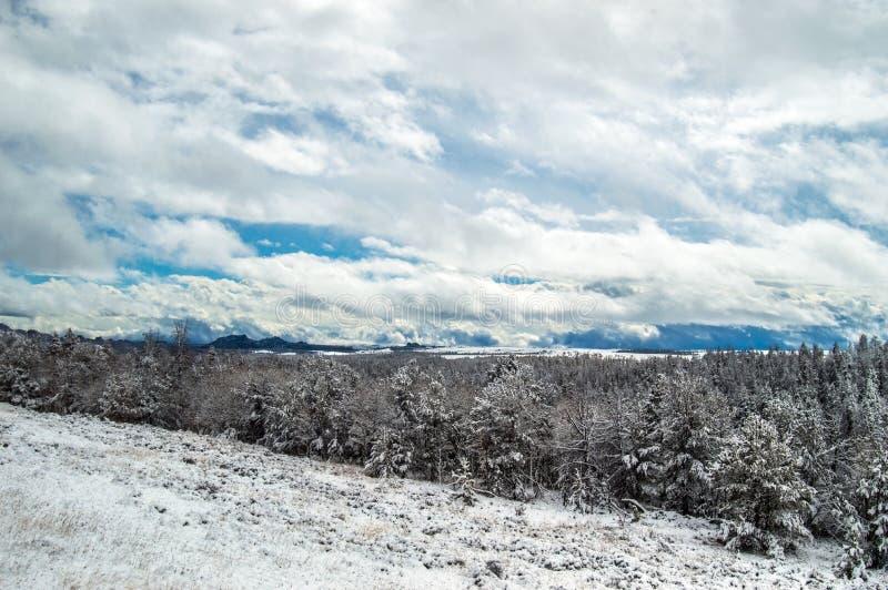 Schnee bedeckte Holz in Wyoming stockfotografie