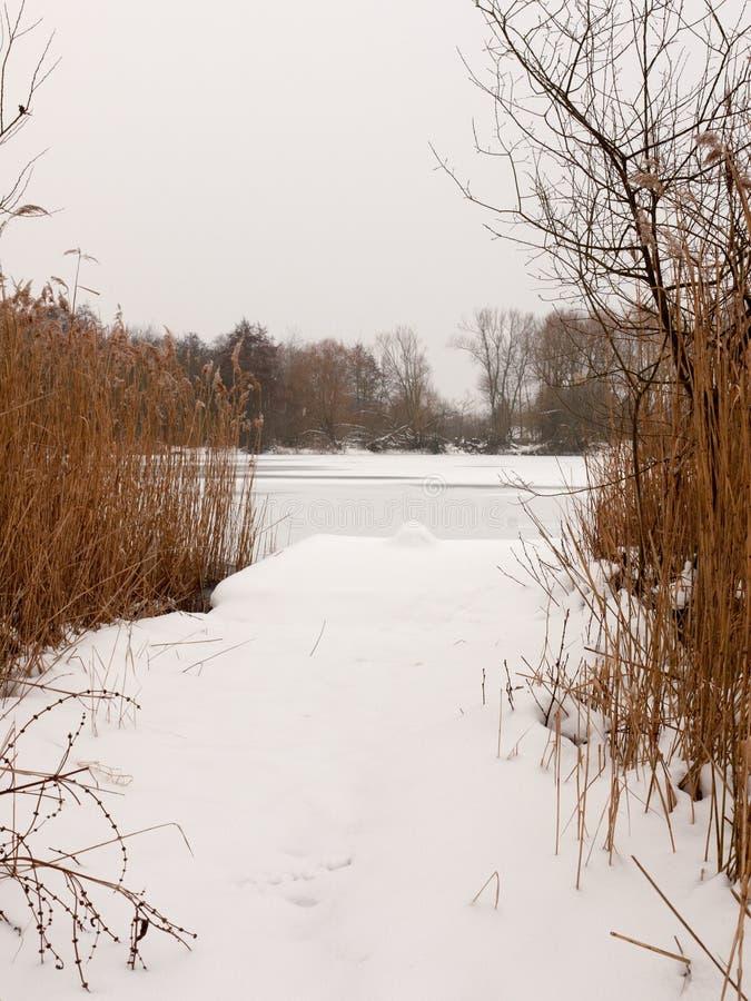Schnee bedeckte Ponton nahe See mit eingefrorenen Schilfen Winterden tag lizenzfreie stockfotografie