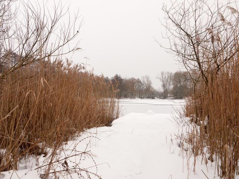 Schnee bedeckte Ponton nahe See mit eingefrorenen Schilfen Winterden tag stockfotografie