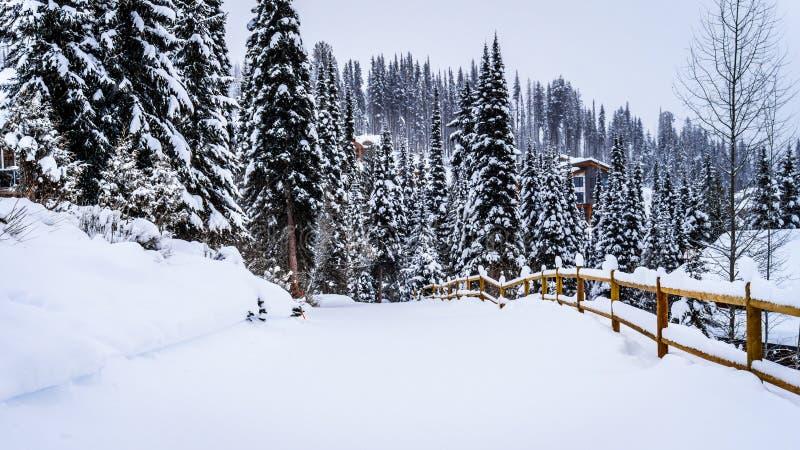 Schnee bedeckte Straßen und Bäume im Shuswap stockfoto