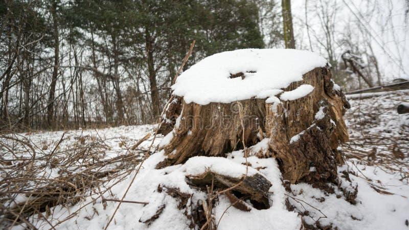 Schnee bedeckte Stumpf im Holz stockfoto