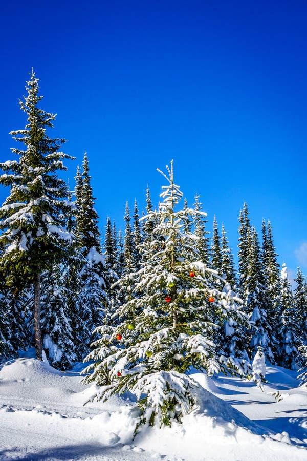Schnee bedeckte Weihnachtsbaum mit Dekorationen im Wald stockfoto