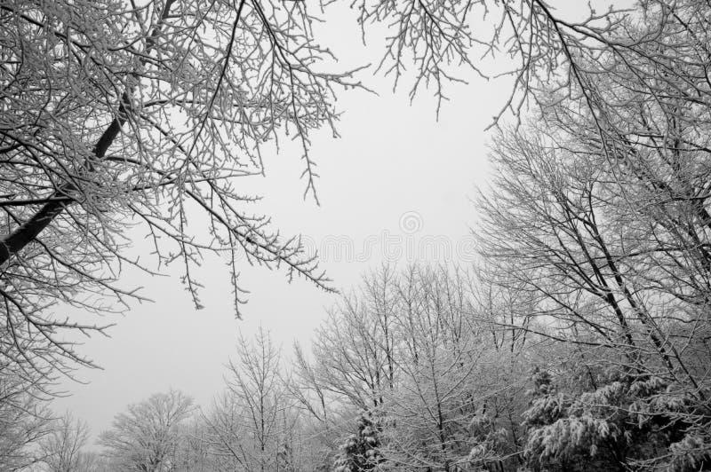 Schnee beladene Laubbäume durch eine Nahaufnahme der schneebedeckten Straße lizenzfreies stockfoto