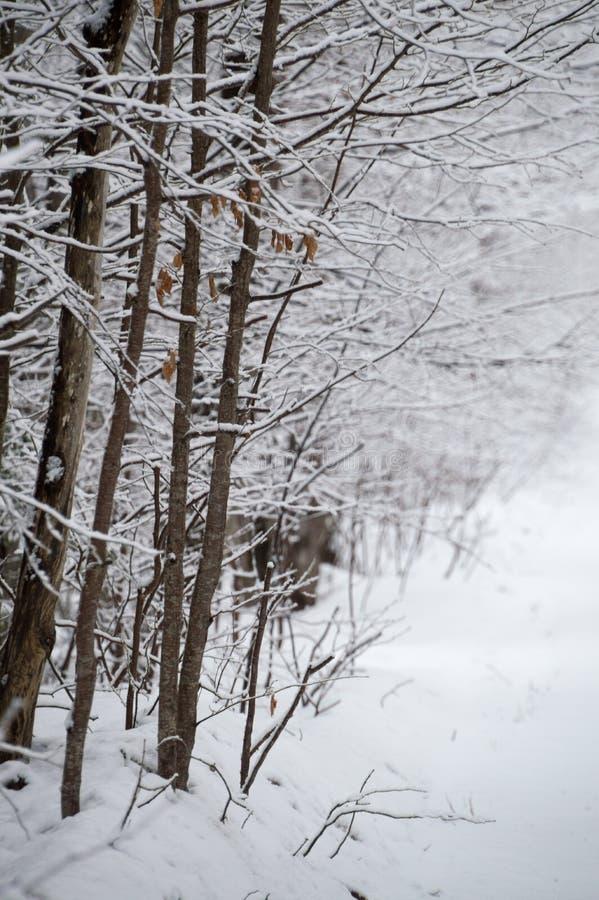 Schnee beladene Laubbäume zeichnen die Schnee umfasste Straßenlandschaft lizenzfreie stockfotos