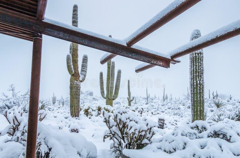 Schnee am Braun-Ranch-Hinter-Kopf in Nord-Scottsdale AZ stockbilder