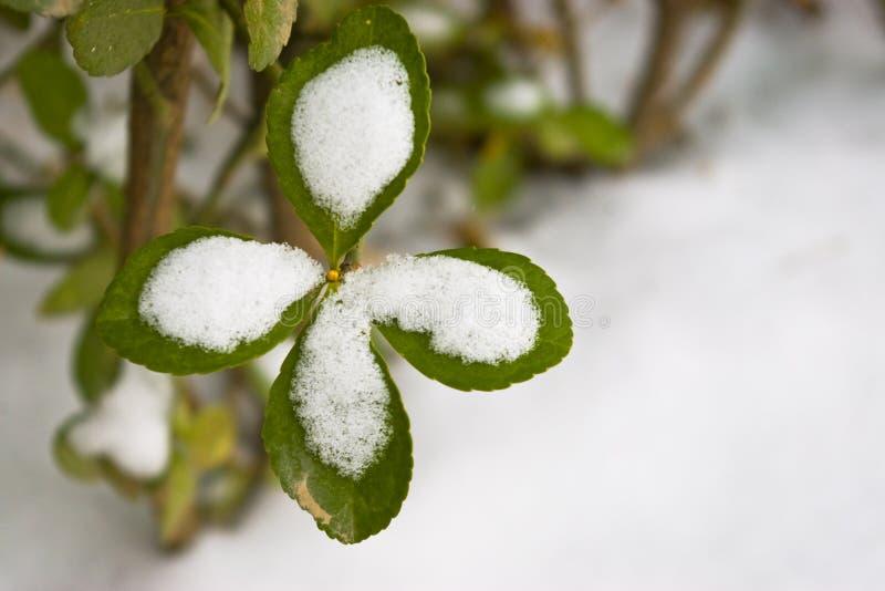 Schnee deckte Blatt ab lizenzfreie stockfotografie