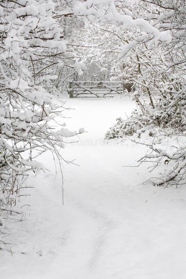 Schnee deckte Holz ab lizenzfreies stockfoto