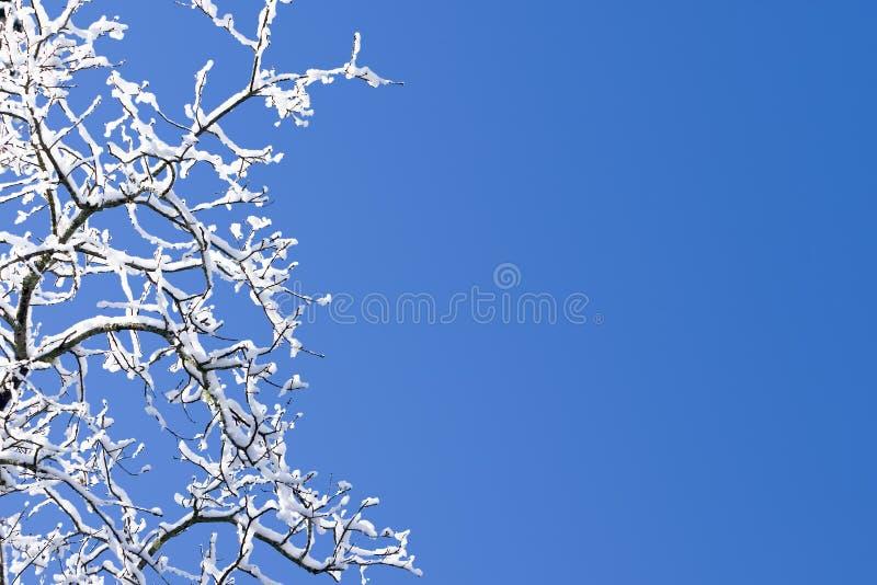 Schnee deckte Zweig-blauen Himmel ab lizenzfreies stockbild