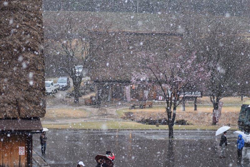 Schnee-Frühlings-Cherry Blossom Tree Shirakawago Mountain-Haus-Architektur Japan stockfoto