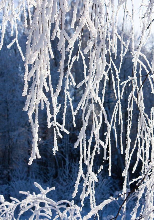 Schnee-Frost umfaßte Zweig der Birke
