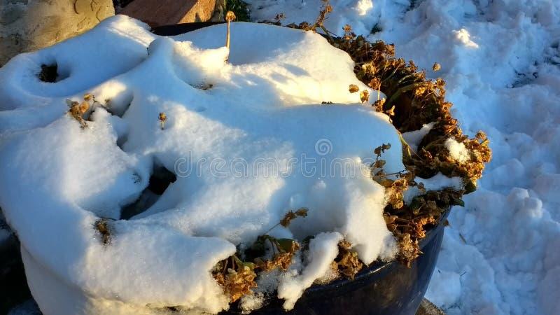 Schnee im Blumentopf stockbilder