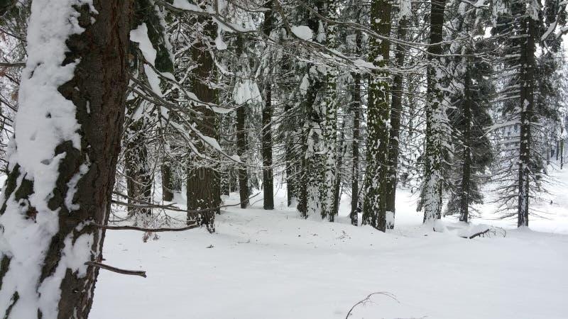 Schnee im Nationalpark lizenzfreies stockfoto