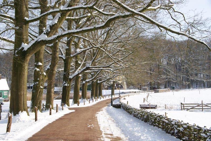 Schnee im Park lizenzfreie stockfotografie