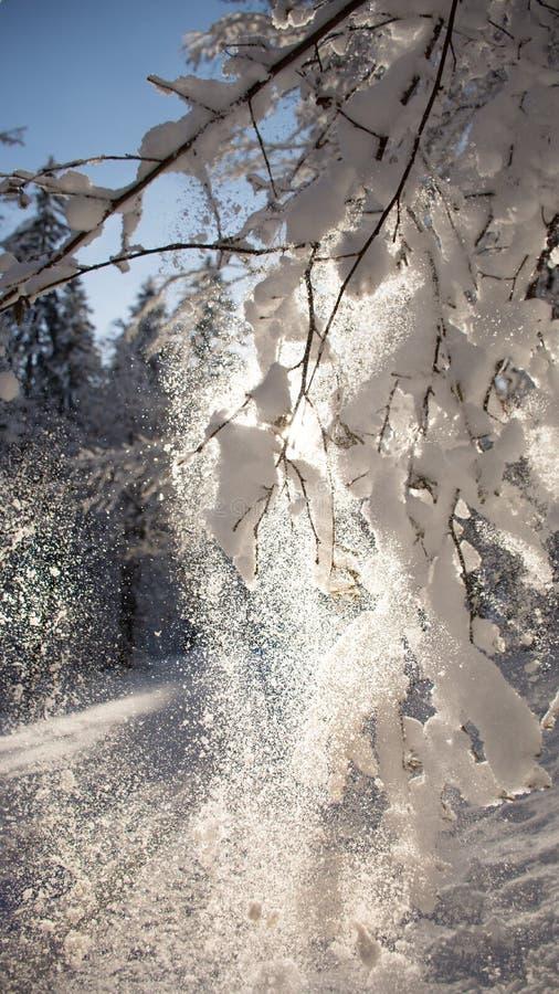 Schnee im Sonnenschein stockfotografie