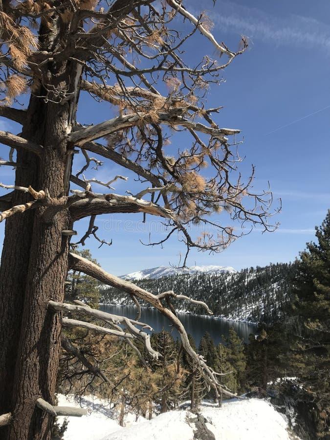 Schnee in Kalifornien lizenzfreie stockbilder