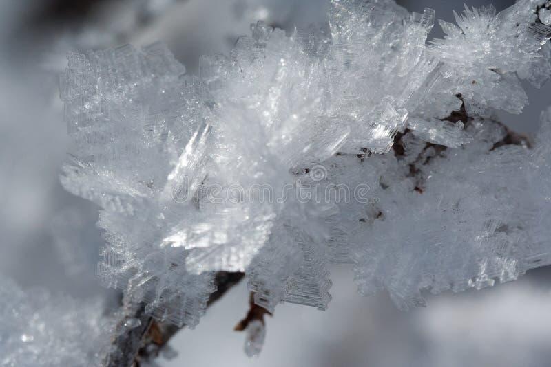 Schnee-Kristalle auf einer Niederlassung lizenzfreie stockfotografie