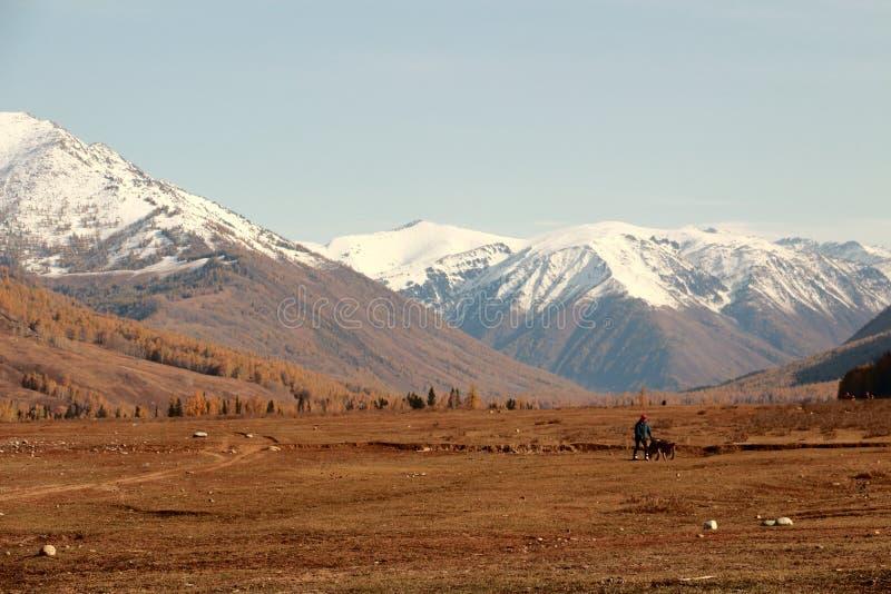 Schnee mit einer Kappe bedeckte Berge, Herbstgras lizenzfreie stockfotografie