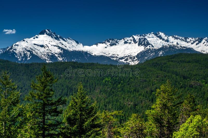 Schnee mit einer Kappe bedeckter Rocky Mountains- und Stoffwald lizenzfreies stockbild