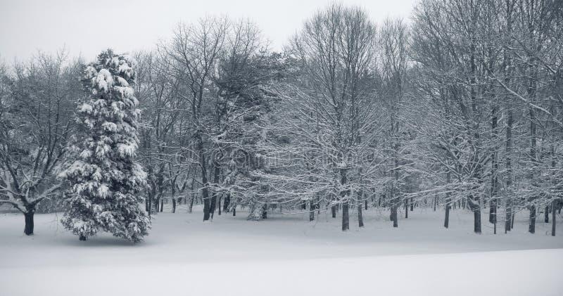 Schnee-Panorama lizenzfreies stockfoto