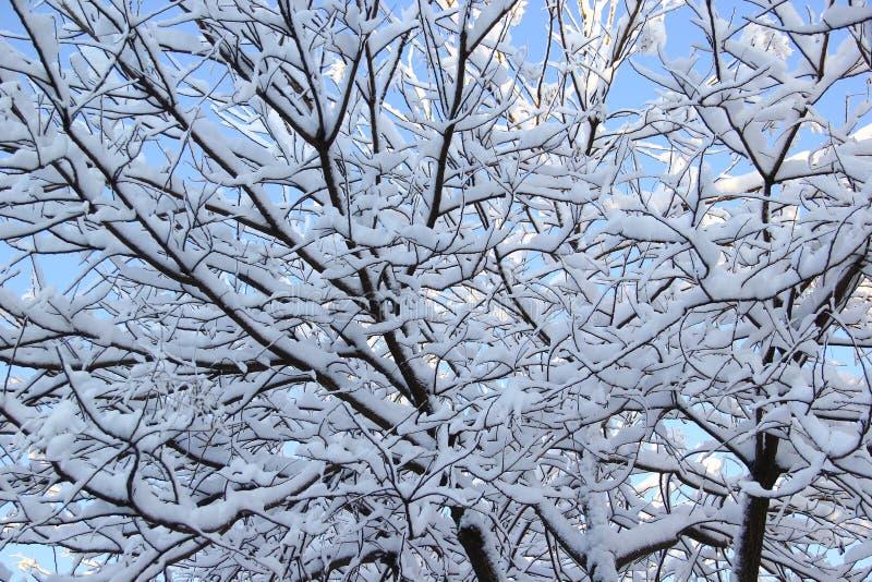 Schnee umfaßte Zweig stockfotos