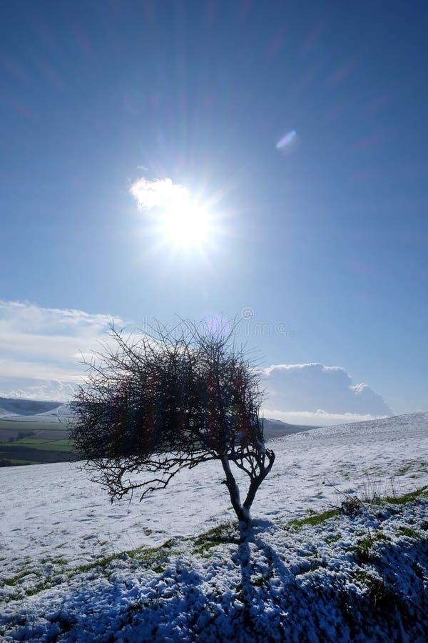 Schnee umfasste Sussex-Abstiege mit einem windswept Baum in der Mitte lizenzfreie stockfotos