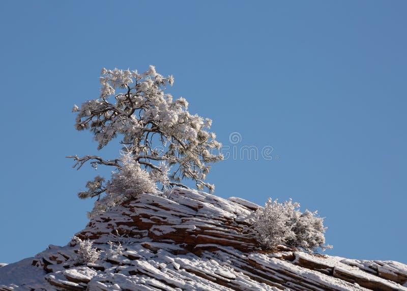 Schnee umreißt jede Niederlassung dieses kleinen Baums und jede Schicht des roten Sandsteins, dass er an wächst stockbilder