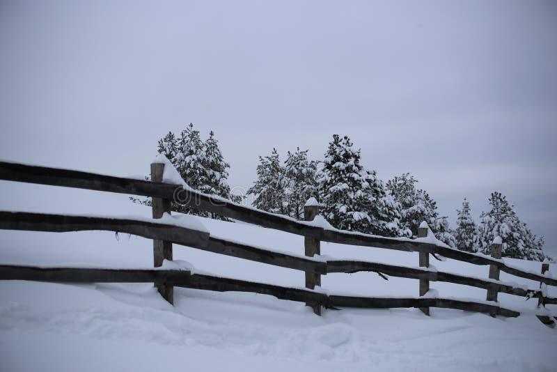 Schnee und Bäume stockfoto