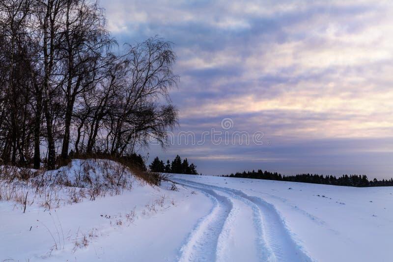 Schnee und eine Baumgruppe bei Sonnenuntergang lizenzfreies stockbild