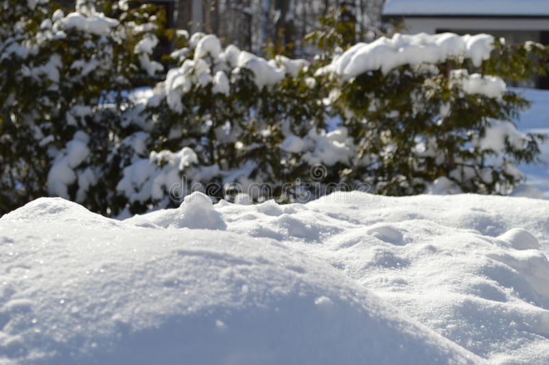 Schnee und Pelze stockbilder