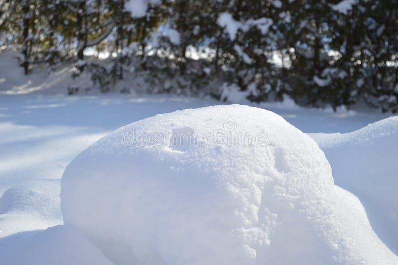 Schnee und Pelze 2 lizenzfreie stockfotografie