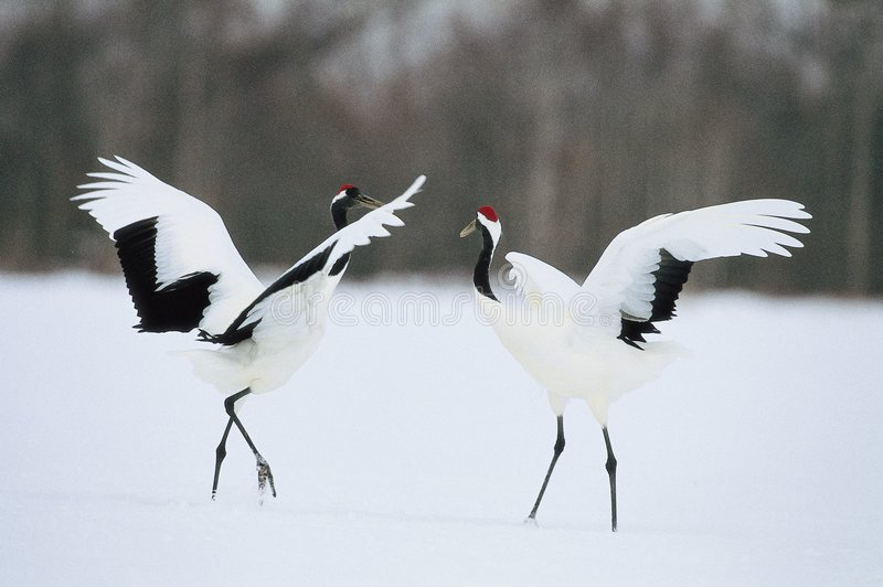 Schnee unter Vögeln stockbild
