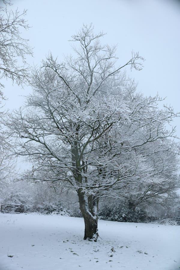 Schnee-Winter-Baum in Waliser-Landschaft stockfotos
