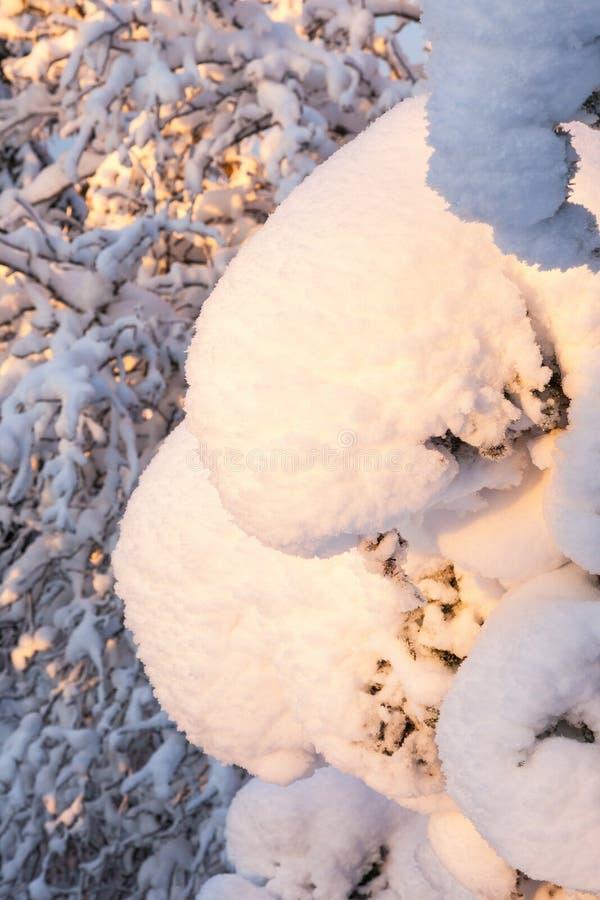 Schneeballmast lizenzfreies stockfoto