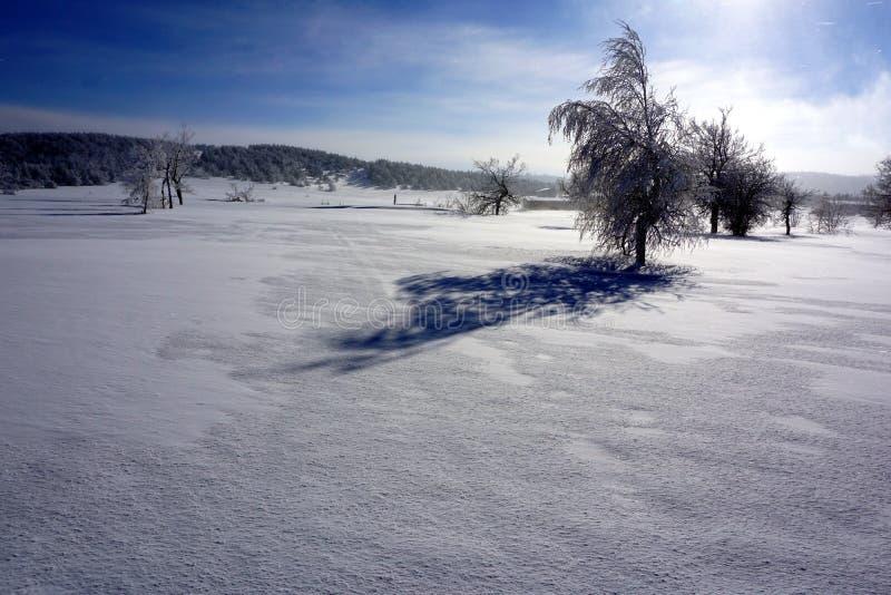 Schneebedeckte Bäume rasieren lange Schatten über weißem Schnee lizenzfreie stockfotos