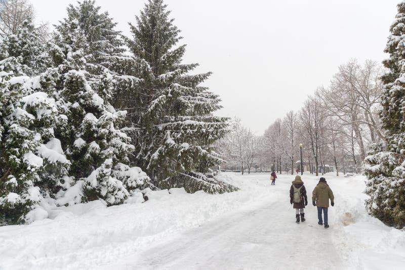 Schneebedeckte Landschaft des Winters in Montreal stockfotografie