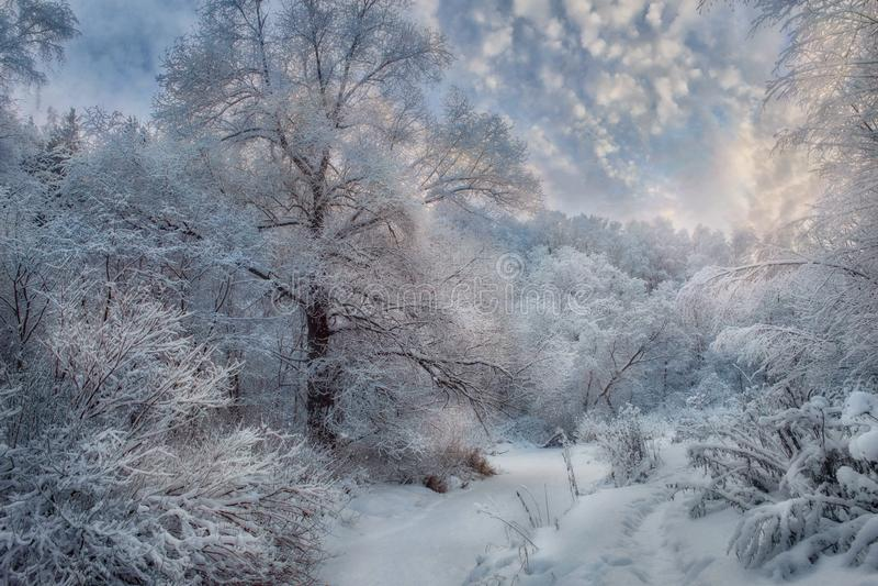 Schneebedeckte Landschaft des Winters am sonnigen Tag stockbild