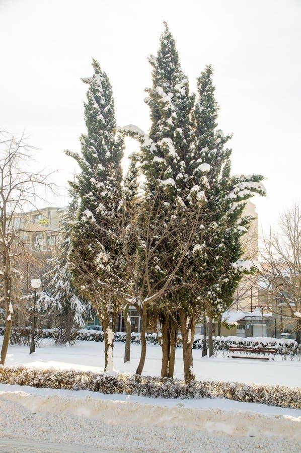 Schneebedeckte Tannenbäume in einer Stadt parken Pomorie, Bulgarien, Winter 2017 stockfotografie