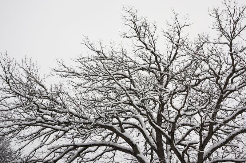schneebedeckter Baum lizenzfreie stockfotos