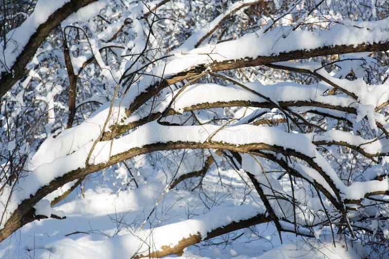 Schneebedeckter Baumzweig stockfotos