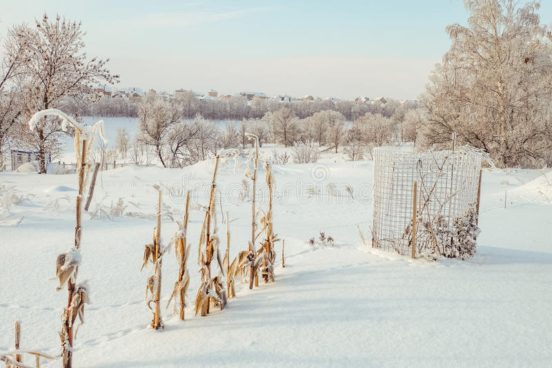 Schneebedeckter Garten des Winters lizenzfreie stockfotografie