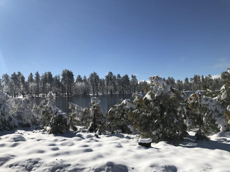 schneebedeckter Tag lizenzfreie stockbilder