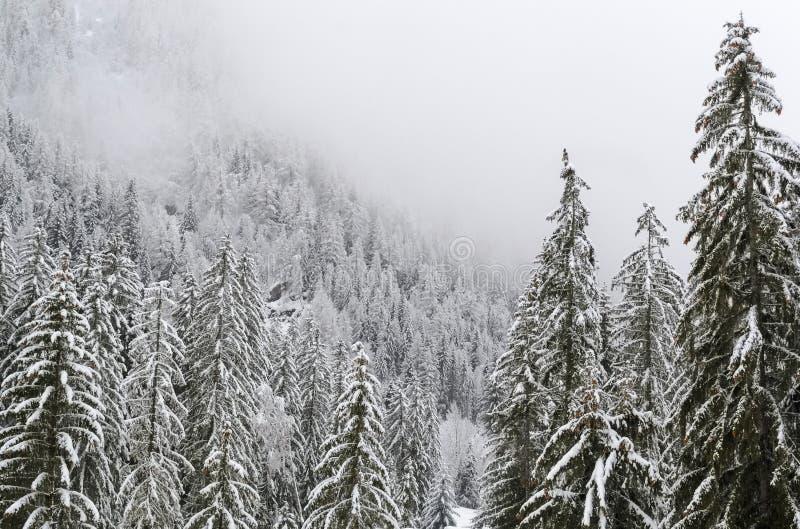 Schneebedeckter Tannenwald in den Alpen lizenzfreies stockfoto