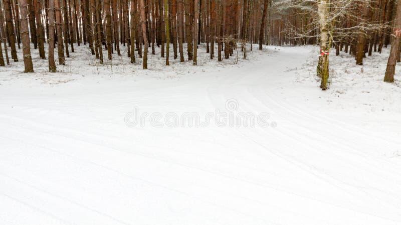 Download Schneebedeckter Wald Des Winters Stockbild - Bild von himmel, park: 96930293