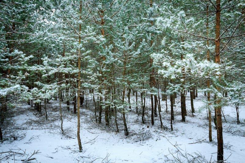 Download Schneebedeckter Wald Des Winters Stockfoto - Bild von straße, eingefroren: 96930294